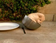 WATCH: A Chow Chow Puppy's Adorable Struggle to Hoist Himself Out of a Mixing Bowl.