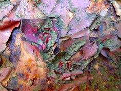 Beauty in Decay rust, peeling paint, and lichen // art in nature, colour, pattern & texture inspirations