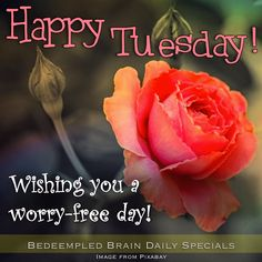 Happy Tuesday. Wishing You A Worry  Free Day!