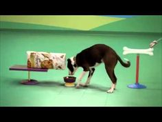 Dog Goldberg Machine by Beneful Commercial