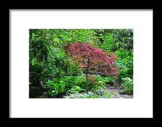 spring, tree, woods, forest, nature, landscape, michiale schneider photography