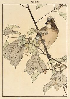Imao Keinen : Blue Japanese Oak, Jay at Davidson Galleries Japanese Bird, Japanese Prints, Bird Illustration, Botanical Illustration, Illustrations, Davidson Galleries, Japanese Painting, Woodblock Print, Bird Art