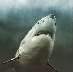 Even After Being Attacked by Sharks, This Photographer Recognizes Their Beauty and Importance (PHOTOS)