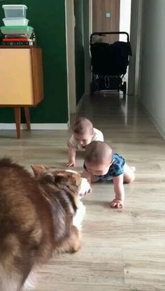 Cute dog and babies adorable pet compilation Cute Funny Baby Videos, Cute Funny Babies, Funny Videos For Kids, Cute Animal Videos, Funny Baby Gif, Funny Kids, Funny Cute, Cute Kids, Adorable Babies