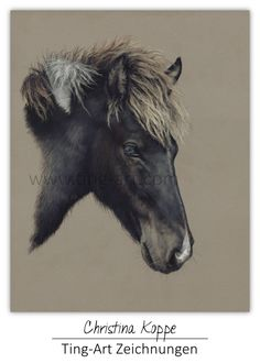 #Sid #icelandic #horse #isländer #isi #iceland #painted #drawn #draw #drawing #painting #blackhorse #zeichnung #zeichnen #pastel #pastell #pastellzeichnung #christinakoppe #ting #tingart #TingArtZeichnungen