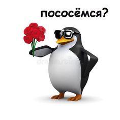 Cat Memes, Dankest Memes, Funny Memes, Stupid Cat, Stupid Memes, Cute Images, Cute Pictures, Hello Memes, Happy Memes