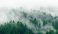 Landscape Photography Mountains Evergreen Trees Mysterious Fog Forest Mist Blue Green. $35.00, via Etsy.