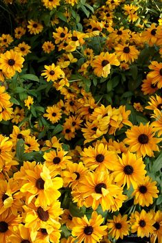 Love these flowers. Saw them in Switzerland Love these flowers. Saw them in Switzerland The post Love these flowers. Saw them in Switzerland appeared first on Easy flowers. Yellow Aesthetic Pastel, Rainbow Aesthetic, Aesthetic Colors, Flower Aesthetic, Aesthetic Pictures, Sunflowers And Daisies, Yellow Flowers, Yellow Sunflower, Art Flowers