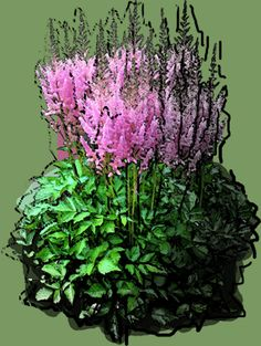 Astilbe chinensis Pumila Puzzle, Astilbe, Photoshop, Plants, Puzzles, Riddles, Planters, Jigsaw Puzzles, Plant