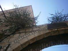 Caper bushes grow out of the arched entryway of the old neighborhood of Nachlaot.