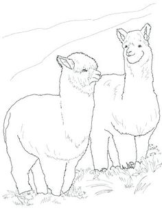 20 willowbank ideas in 2020 coloring pages animal coloring pages printable coloring pages animal coloring pages