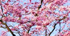 What does spring mean to you?     My latest blog post includes poetry from William Wordsworth    http://www.klloveley.com/2017/04/25/546/