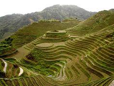 Rice terrace fields of Banaue, Phillipines Baguio Philippines, Philippines Tourism, Manila Philippines, Banaue Rice Terraces, Baguio City, Exotic Beaches, Enjoy The Sunshine, Tourist Spots, Natural Wonders