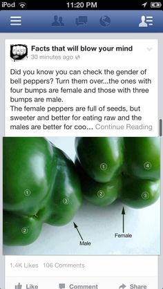 Female peppers are sweeter...just like with humans, LOL