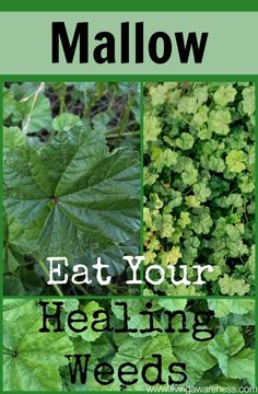 Better Living through healthy choices. Herbology and Herbal Use/Education.