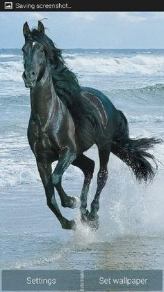 Pferd am Strand - Yasmin Fashions Beautiful Horse Pictures, Most Beautiful Horses, Animals Beautiful, Cute Horses, Pretty Horses, Horse Love, Majestic Horse, Majestic Animals, Black Horses