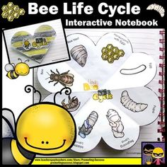 Honey Bee: In this science interactive notebook activity, your students will learn the life cycle of the honey bee. The are five variations of the ONE honey bee foldable for easy differentiation for all students' needs.https://www.teacherspayteachers.com/Product/Honey-Bee-Life-Cycle-Science-Interactive-Notebook-Activities-Foldables-2081366
