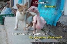 Свежая котоматрица (37 фото)
