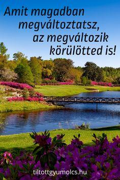 Amit magadban megváltoztatsz, az megváltozik körülötted is! Hogyan tudod Te is megváltoztatni kapcsolataidat, a környezetedet, és az egész világot? Kattints légy szi és tudj meg többet! >>> Gardening For Beginners, Gardening Tips, Hyacinth Plant, Instagram Status, Plan Front, Growing Orchids, Garden Posts, Olive Garden, Garden In The Woods