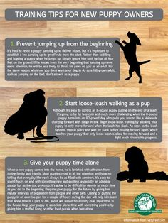 Here are some puppy training tips for first time puppy owners. #Pets #Puppies #Training #Tips