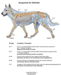 Acupressure for Arthritis in Dogs and Horses