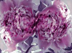 Bloom 6062 , 2012