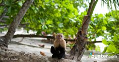 A monkey, chilling on the beach at the Arenas Del Mar Beach And Nature Resort