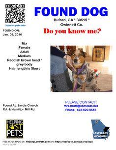 Found Dog - Mix - Buford, GA, United States