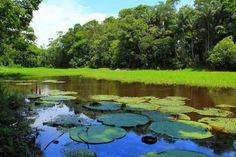 Amazonas – Brasil – Em Amazonas eu quero me aconchegar a você ...