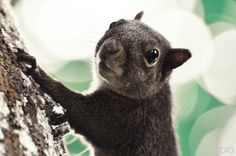 Squirrel ©