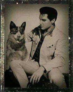 Blue Heeler with Elvis Aussie Cattle Dog, Austrailian Cattle Dog, Cattle Dogs, Elvis Presley, Dog Rules, Dogs Golden Retriever, Retriever Dog, Cinema, Dog Pictures