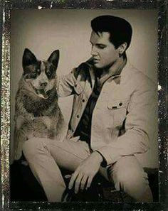 Landmaster Memphis Blues, owned by Connie Redhead, Australia (Connie LOVES everything Elvis!)