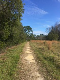 So I am in Florida and I have finally been to Disney…… The Disney Wilderness Preserve that is and it