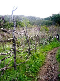 i find funky fences like this, look best in beautiful natural places...