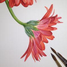 #botanicalillustration #botanical #illustration…