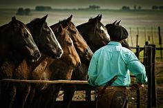 RS Rio Grande Do Sul, Cinema, Beautiful Horses, Country Life, Patagonia, Cowboys, Chile, Brazil, Mustangs