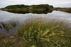 The Tarkine, Tasmania