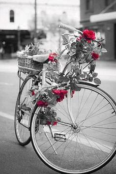 lovely bicycle with roses draped; black and white photography