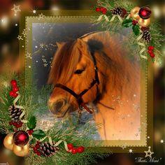Merry Christmas! Christmas Horses, Christmas Stuff, Merry Christmas, Fjord Horse, Horse Ears, Animals, Greeting Cards, Christmas Things, Merry Little Christmas