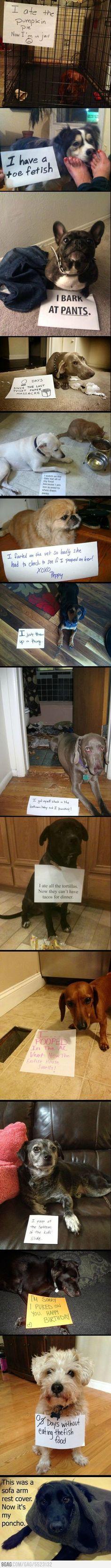 Bad dogs being bad. Damn near peed on myself LOL!