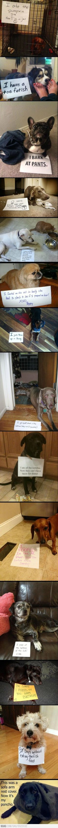 Bad dogs being bad - Imgur