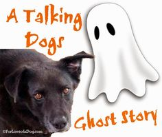 Tucker, the Dog Who Played with Ghosts - A Halloween #ThrowbackThursday | Talking Dogs at For Love of a Dog | Bloglovin'