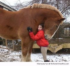A big hug – The big horse likes giving out hugs to all those who visit. | Perfectly Timed Pics