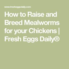 How to Raise and Breed Mealworms for your Chickens | Fresh Eggs Daily®