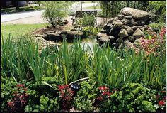 Aside from taxes and insurance considerations, when you're buying a home in Southwest Florida, you'll also want to think about a few other factors. Container Pond, Florida City, Central Florida, Purple Martin House, Lawn Turf, Building A Pond, Green Tips, Small Ponds, Ponds Backyard