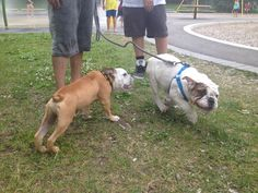 Bruce first meet with Bruno