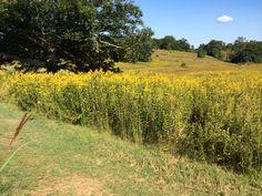 Longwood Meadow