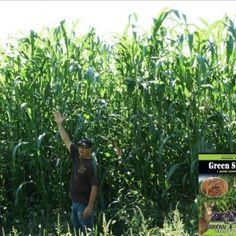 Arrow Seed. Green Screen® Food Plot Screen