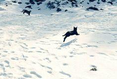 Urocze koty w śniegowym puchu - Turborotfl.com