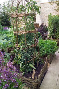 Tomatoes trained through wicker support. Potager garden with raised wicker hurdle beds. Planting includes artichokes, sage and rocket Design: del Buono Gazerwitz Landscape Architecture The Daylesford Organic Garden, 'Summer Solstice at RHS Chelsea Flower Show 2008